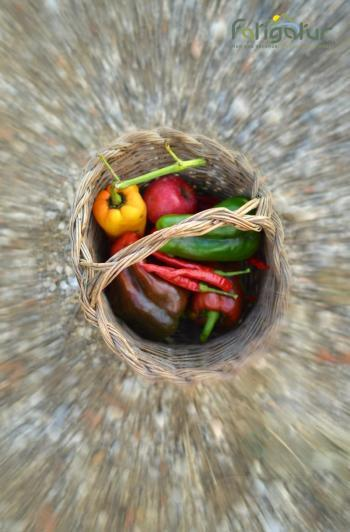 Ortaggi e verdure di campo